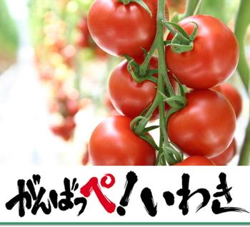 Tomato2_2